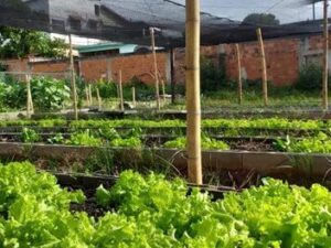 Community vegetable garden in Campo Grande. Photo: Reproduction Living Bay Movement.